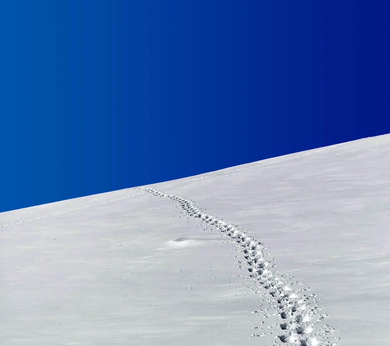 Footprints_In_The_Snow_Blue_Sky
