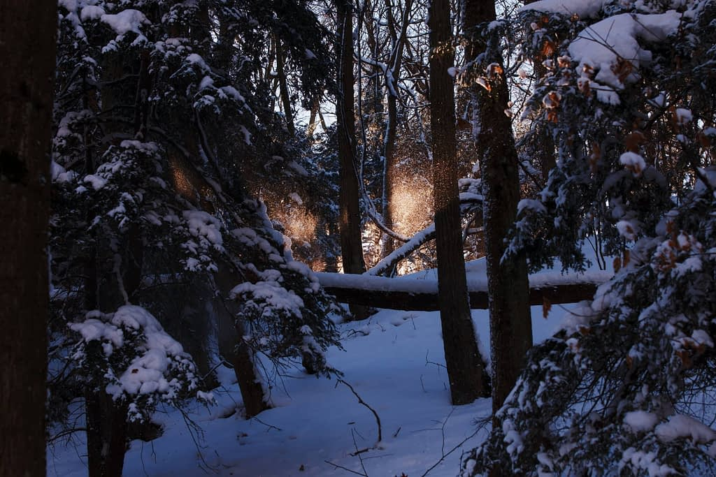 Snowy_Forest_With_Sunlight